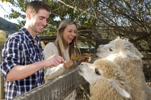 Couple at Petting Zoo
