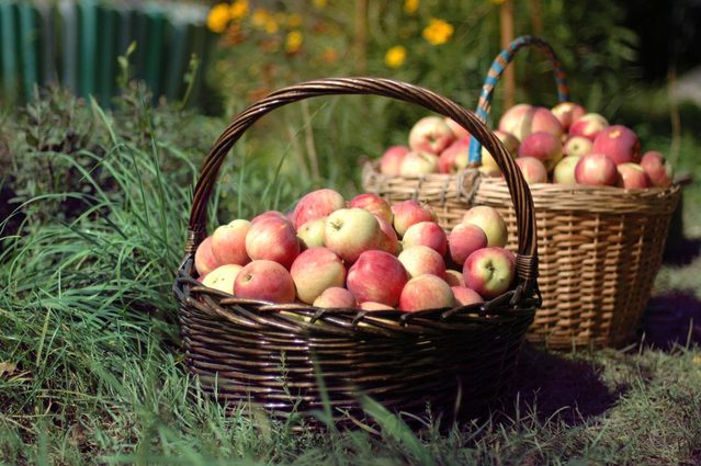 apples-basket-1322712-639x424